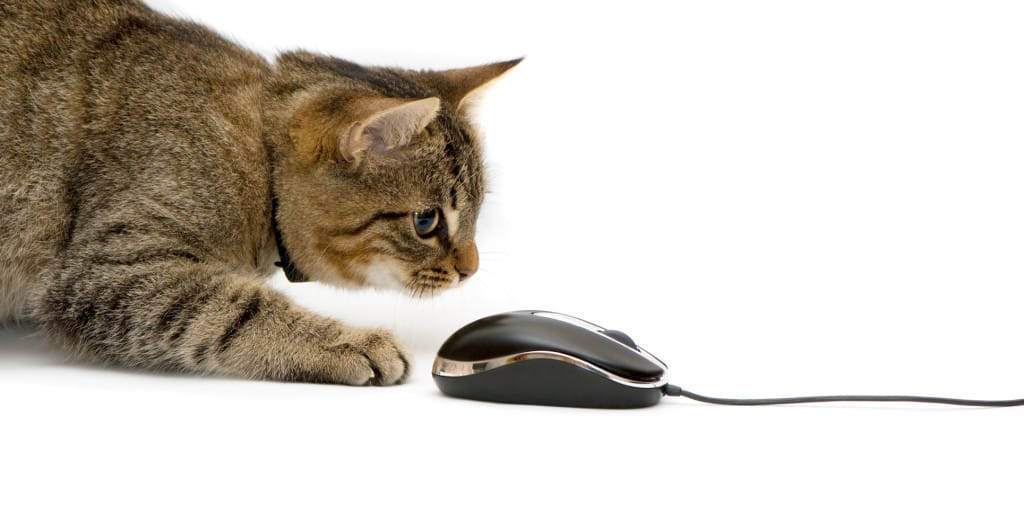 The small kitten plays with the computer mouse.